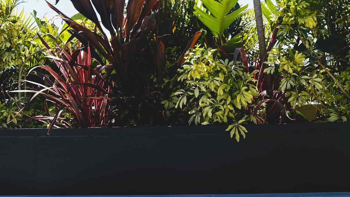 Tropical greenery styling with decking and bench